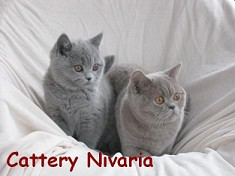 Cattery Nivaria